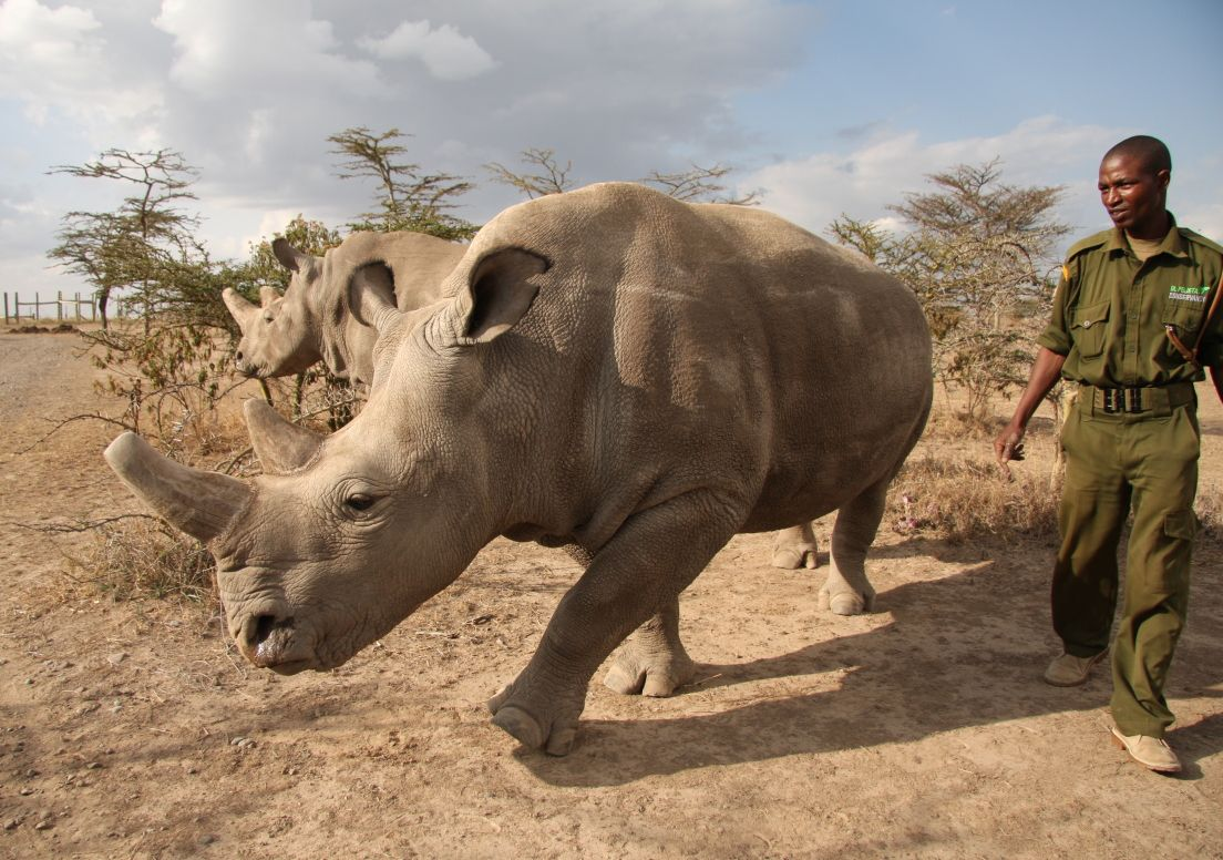 Nosorožci Najin a Fatu