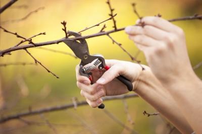Prořezávání stromů (ilustrační foto)
