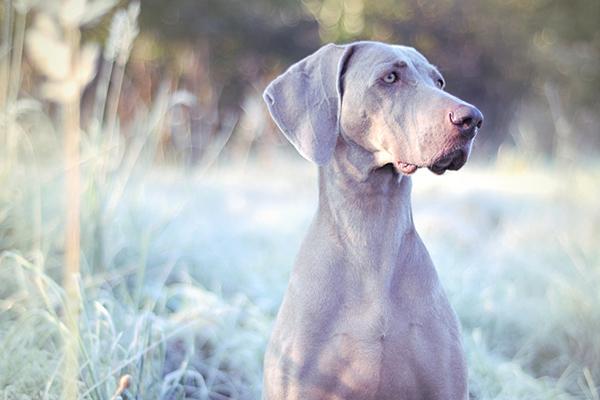 I psi můžou v zimě nastydnout