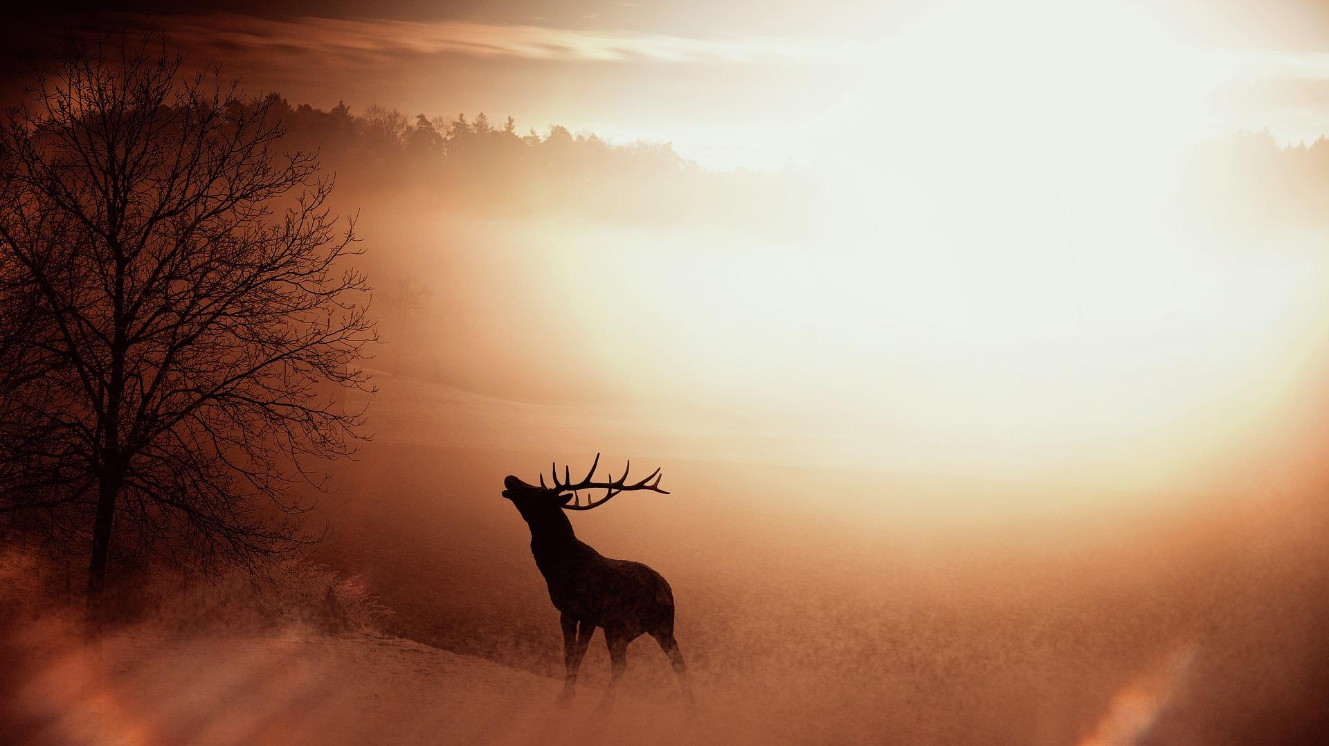 Jelen, příroda (ilustrační foto)