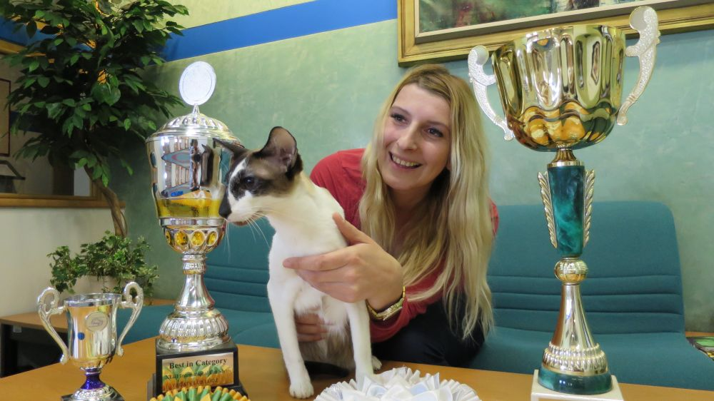 Bára Bartoňová - Jaké kočky jsou v módě? Jak vypadá příprava kočičího šampiona na mezinárodní výstavu International CAT SHOW 2017