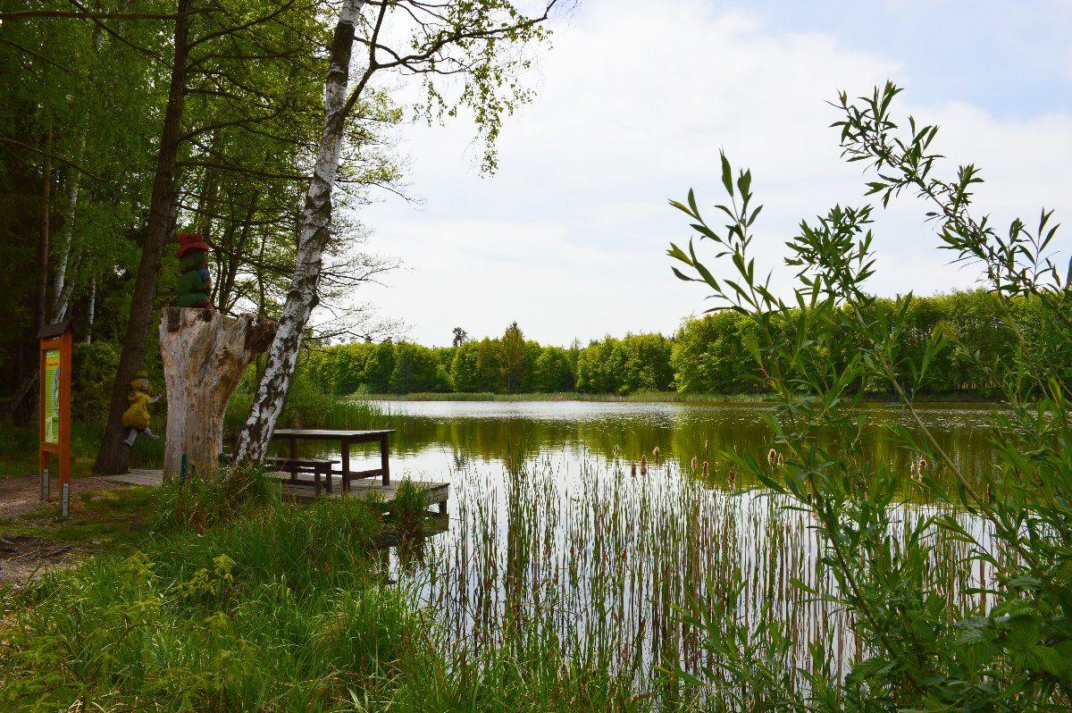 Městské lesy Hradec Králové - rybník