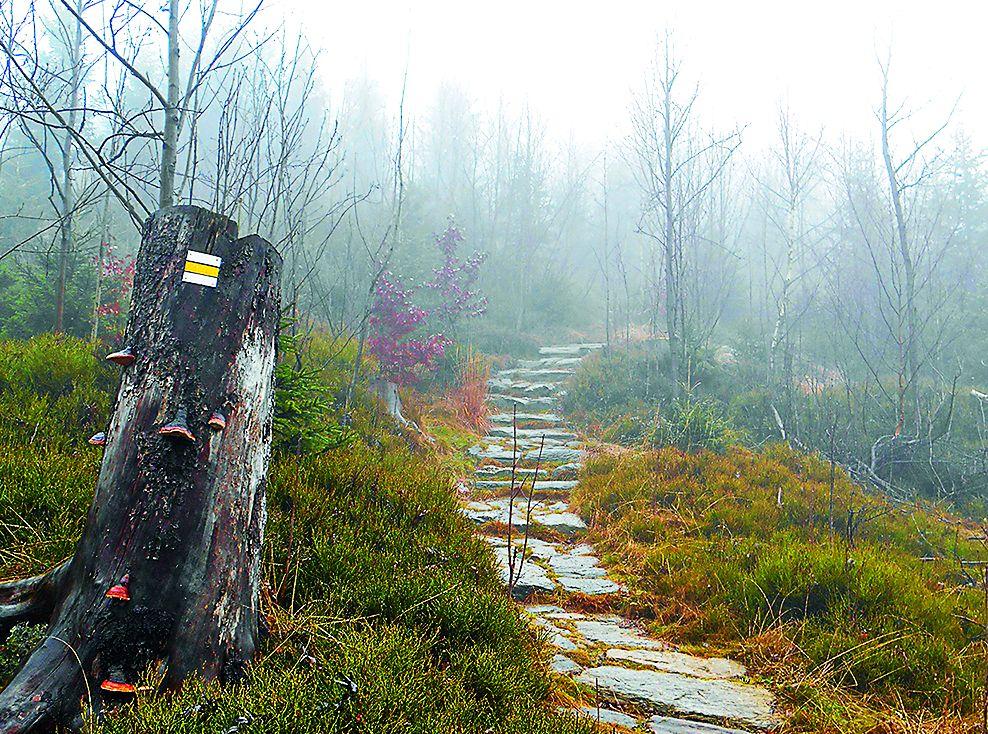 Detail štětované žlutě značené cesty ze Zrcadlových Bud na Černou horu