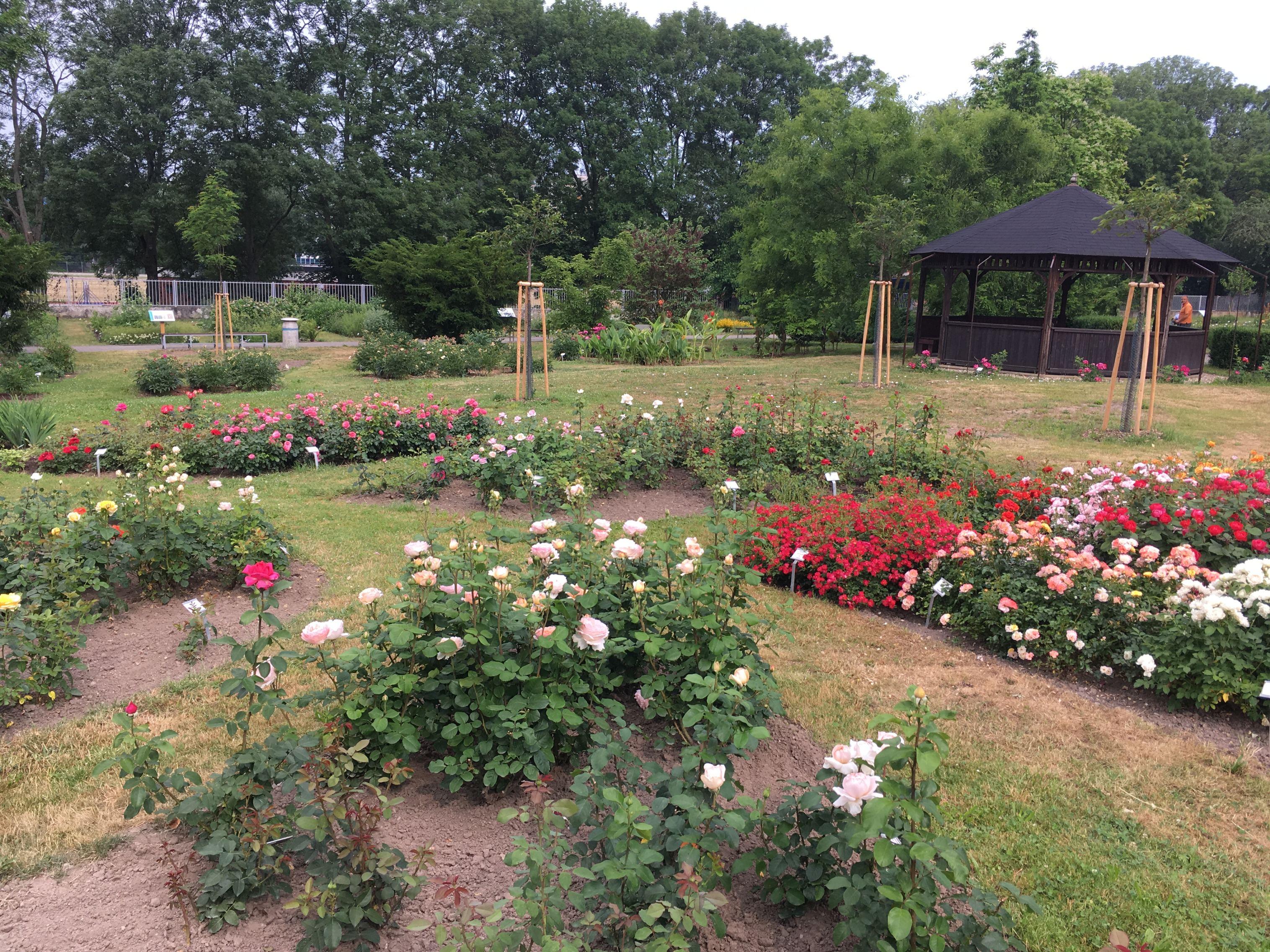 Rozárium v Zahradě léčivých rostlin FF UK v Hradci Králové