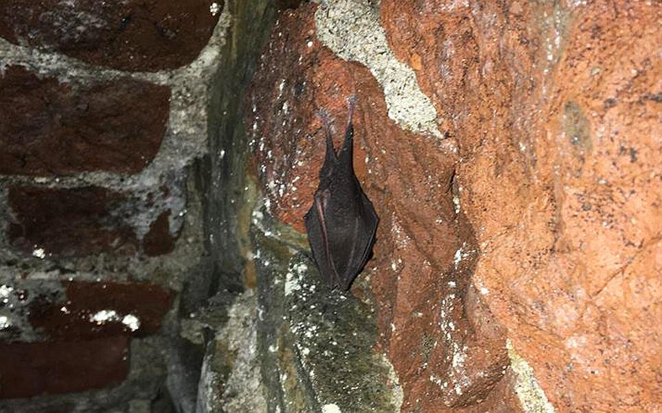 V zámeckých sklepích v Doudlebách nad Orlicí přezimovali vzácní netopýři