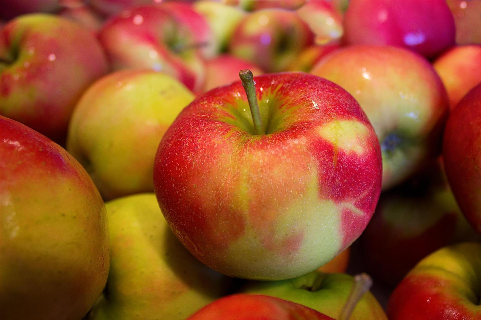 Na ovoce mají speciální skladovací haly s minimem kyslíku v ZD Dolany (ilustrační foto)