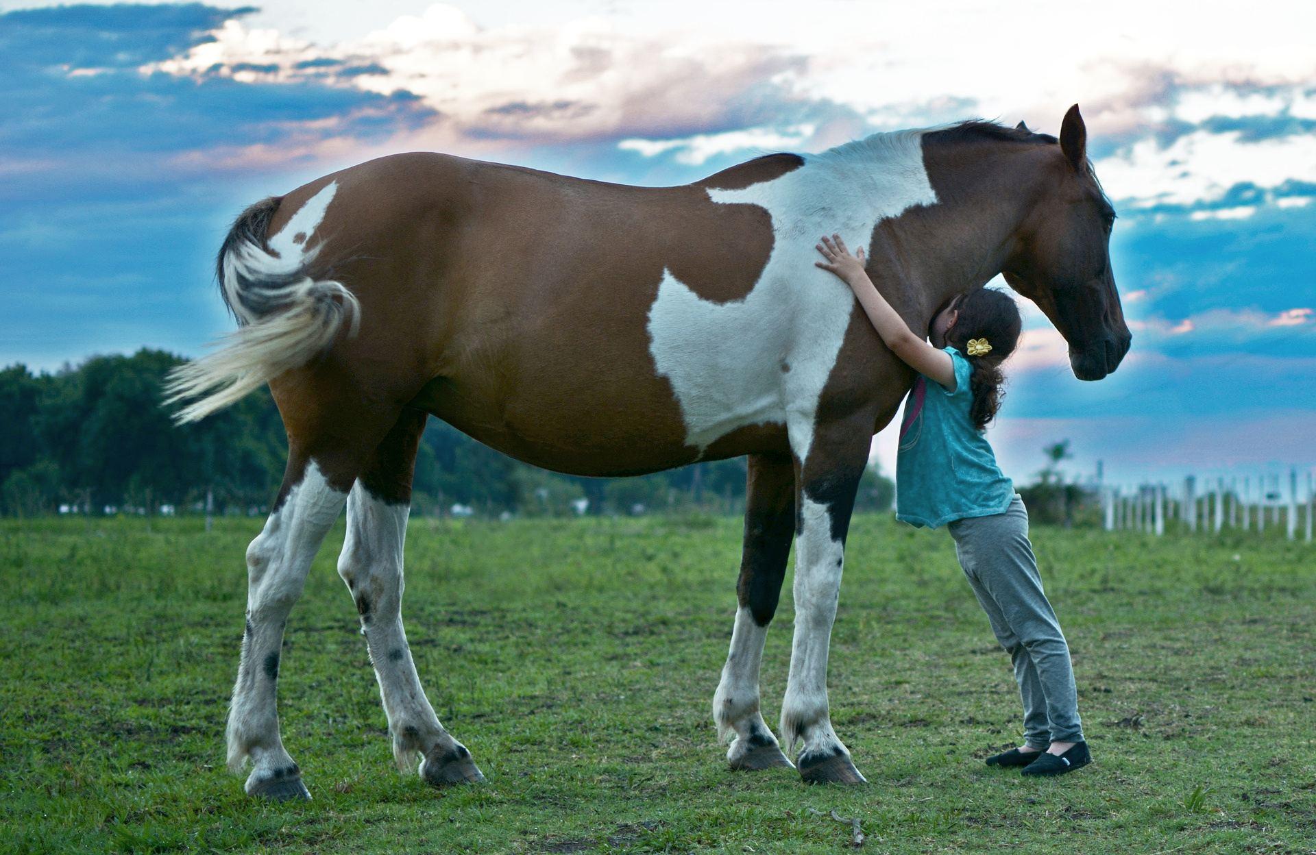 Koně - láska na celý život (ilustrační foto)