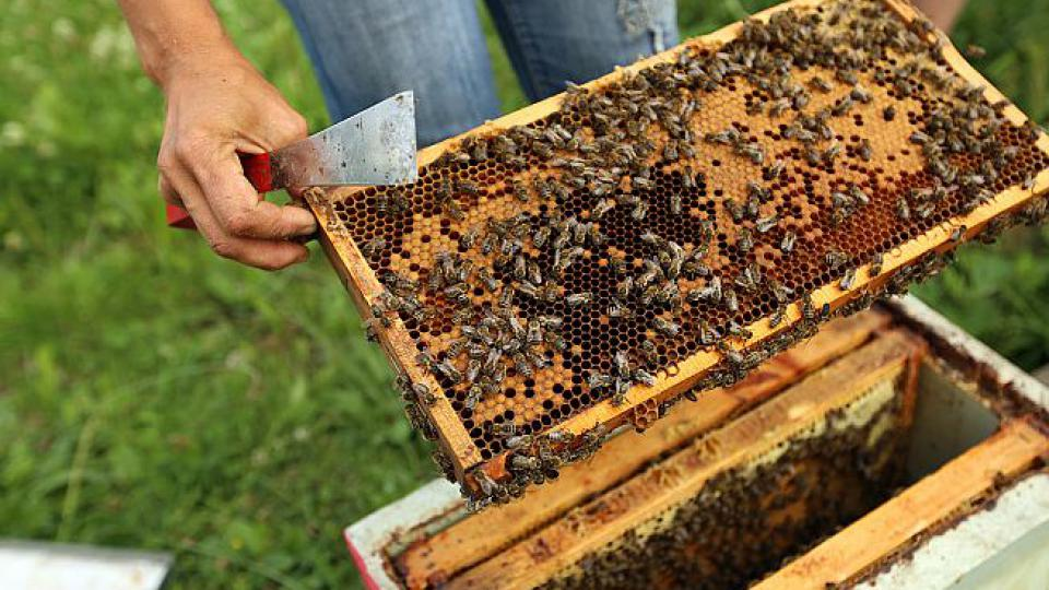 Na včelí farmě Rokytník je stále živo