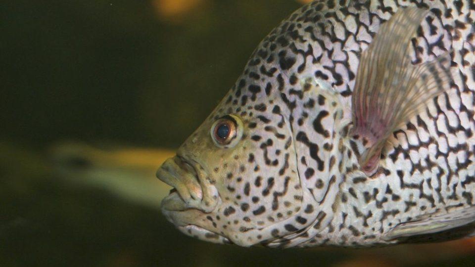 Obří akvárium v Hradci Králové