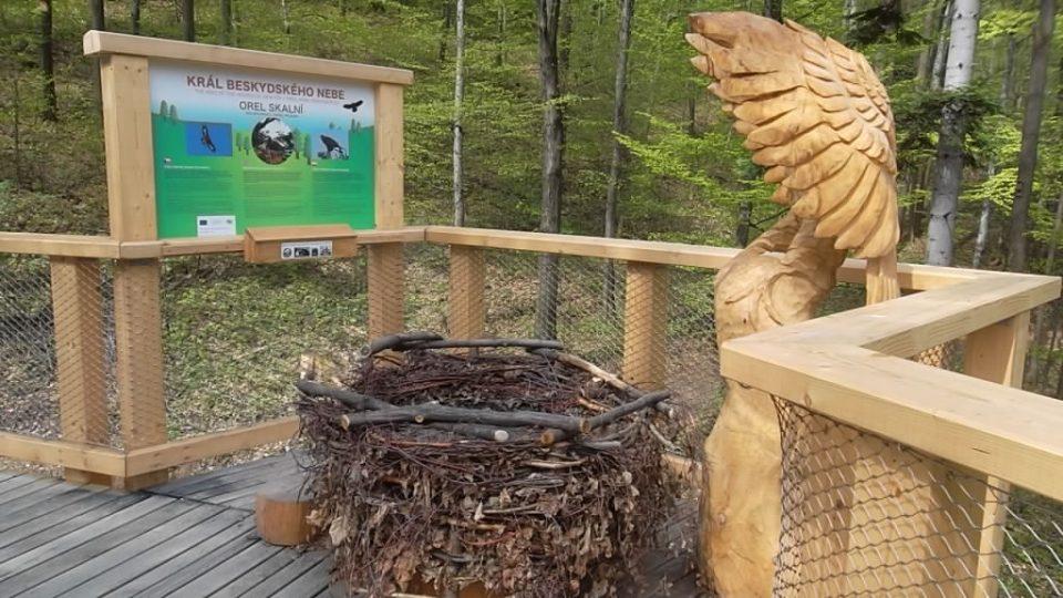 Hravou formou se seznámí s ptačími hodinami a nejzajímavějšími druhy ptáků zdejších lesů
