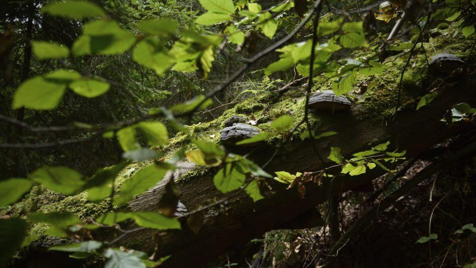 Prales, Broumovské stěny