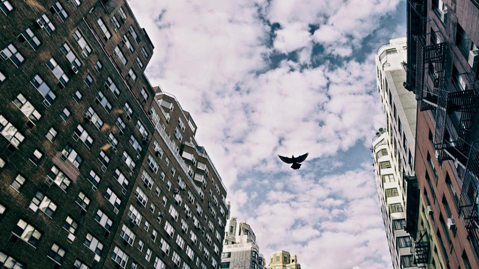 Patrick Marek: New York