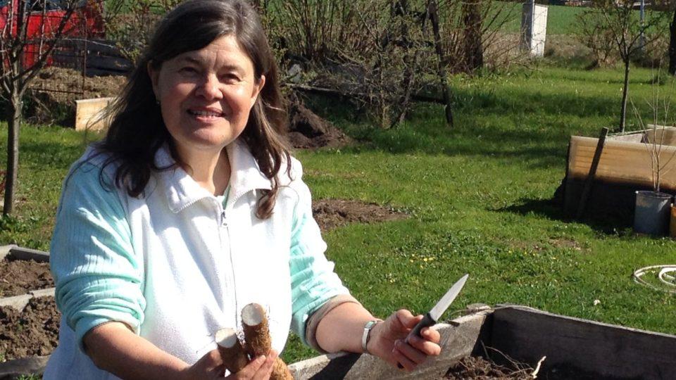 Jarmila Habrová světelný kořen pěstuje