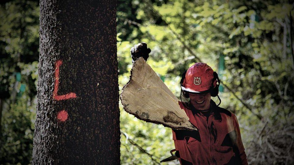 Profese nás baví: Dřevorubec