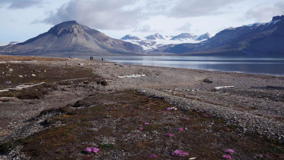Pobřeží zálivu Billefjorden s typickou tundrovou vegetací a zaledněnými štíty v pozadí – typický obrázek Svalbardu