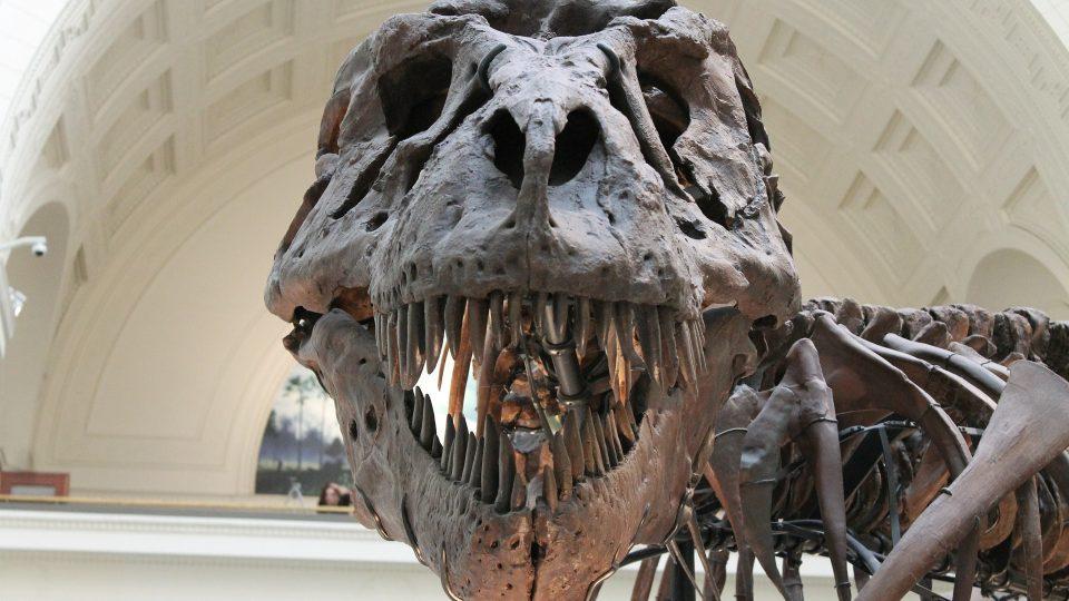 kostra tyranosaura