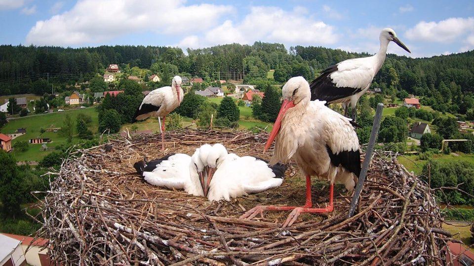 Příběh Bohouše a Bohunky, čápů na komíně v Bohuslavicích