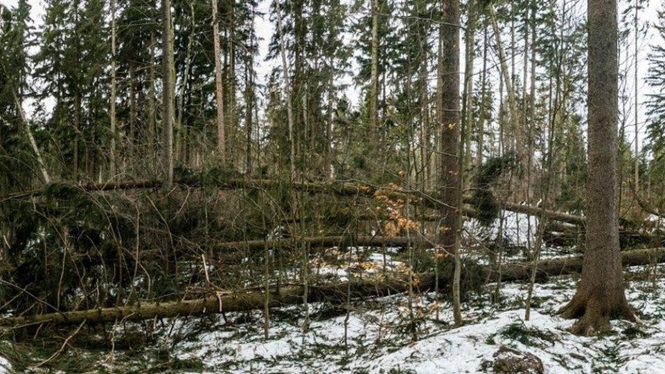 Popadané stromy v lese je zapotřebí co nejdříve odstranit (ilustrační foto)