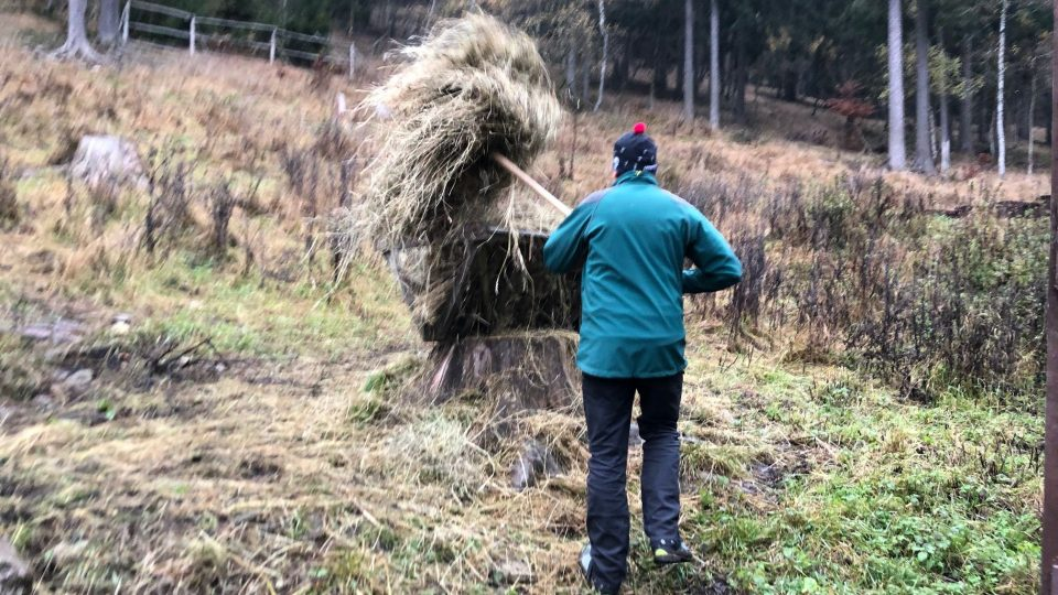 V Krkonoších se už jelení obůrky připravují na zimu