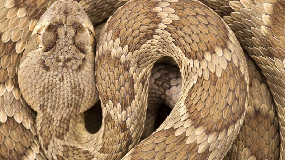 Martin Ertner vyrazil do Arizonské pouště za nebezpečnými hady