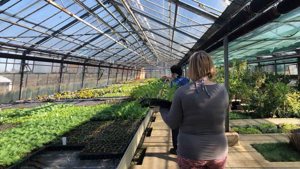 Ve sklenících zahradnické školy v Kopidlně jsou tisíce sazenic zeleniny a letniček, které je potřeba přesadit