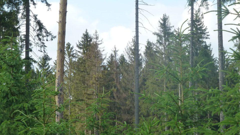 Stromy trpí vedrem a suchem a volají o pomoc