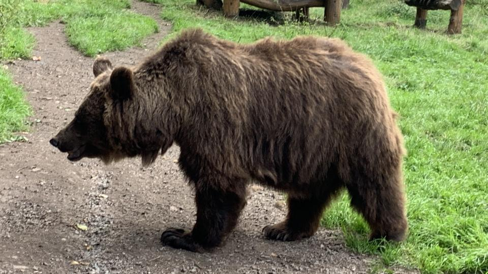 Medvědi Dáša a Ludvík mají svůj domov v zámeckém příkopu v Náchodě