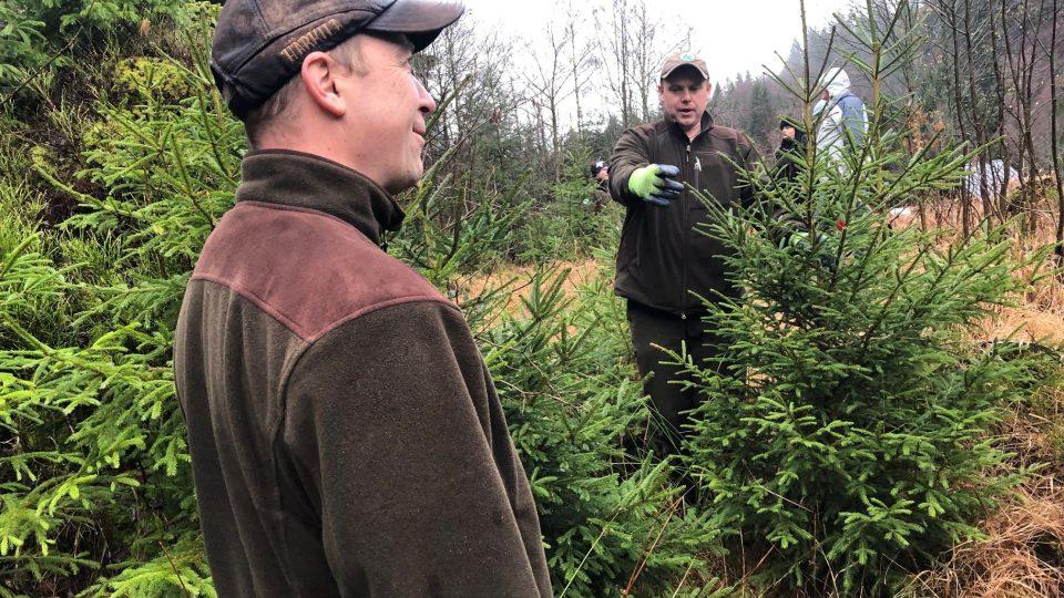 Strážci Krkonošského národního parku začali vyřezávat takzvané vánoční ekostromky