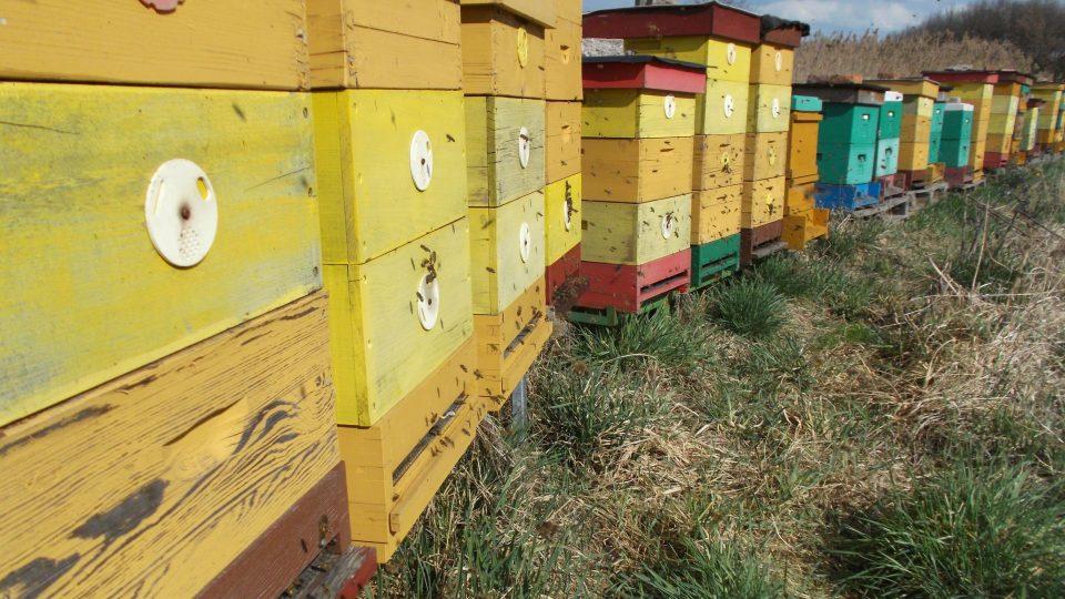 Včelař Václav Jirka rád proniká do fascinujícího světa včel
