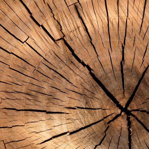 Dřevmuž dřevo trpělivě studuje a odhaluje skryté