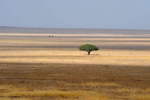 Divoká Afrika