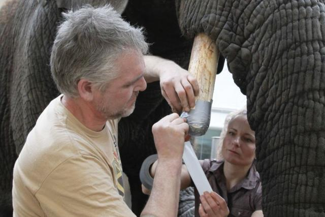 Ošetření slonice Saly