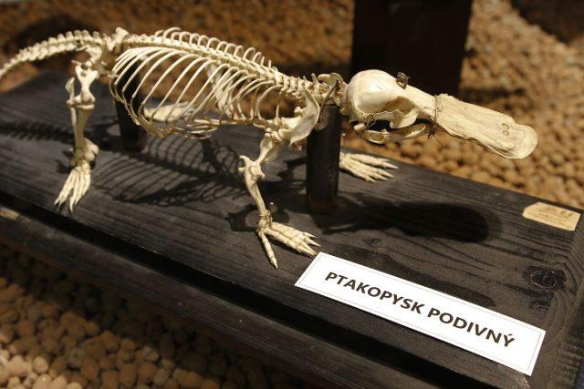 Expozice Umění pod kůži aneb krása kosti v Safari Parku Dvůr Králové