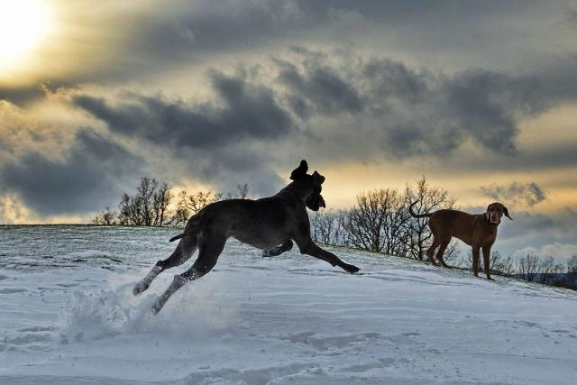 Běžící pes je plný radosti