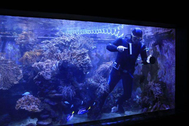 Mořské akvárium v ZOO Dvůr Králové