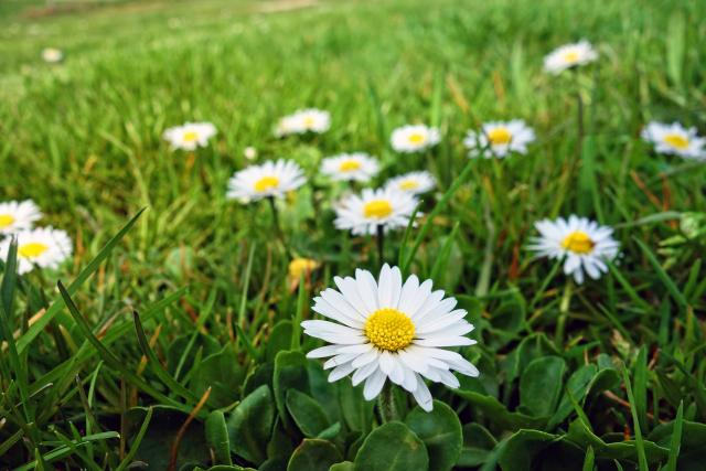 Svěží jarní trávník (ilustrační foto)