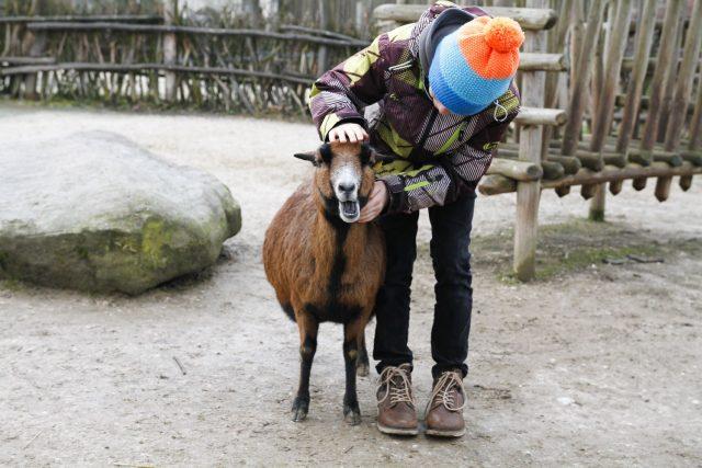 Dětská zoo Safari Parku Dvůr Králové