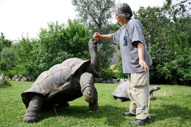 Želvy melouny milují. Udělaly by pro ně cokoli!