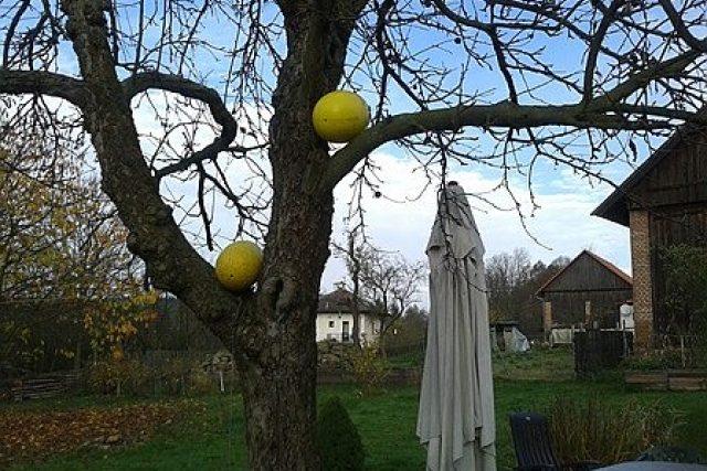 Vejce na stromě