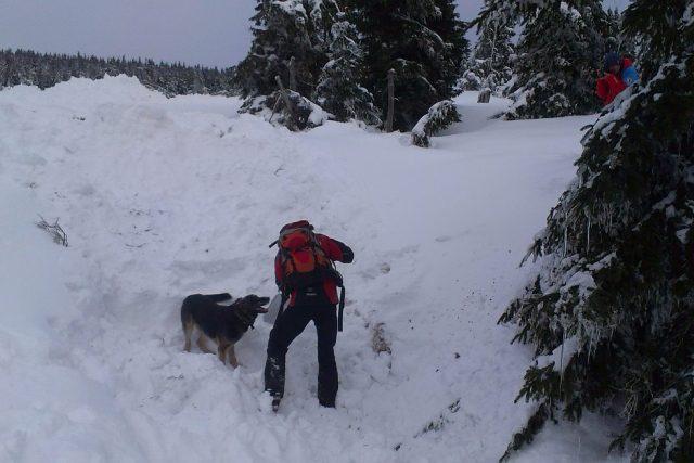 Výcvik lavinových psů