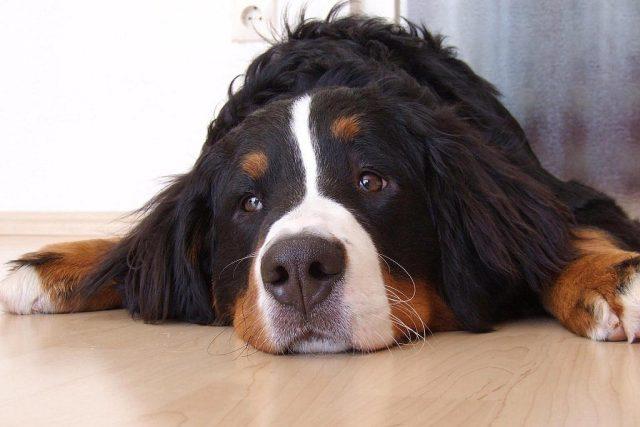 Pes | foto: Dagmar Ruščáková,  Český rozhlas