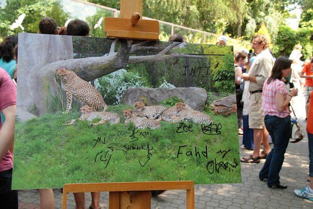 Vzácným paterčatům gepardů nadělil jména prakticky celý svět | foto: Zdeněk Čermák