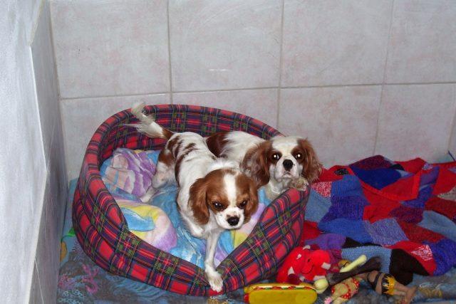 Do hotelu psům dejte věci,  na které jsou zvyklí   foto: Irena Šarounová,  Český rozhlas