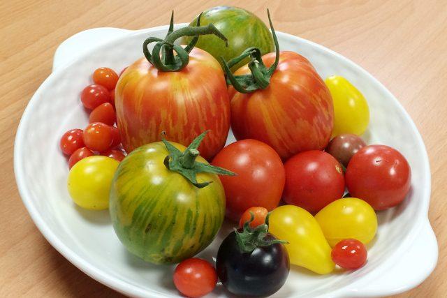 Různé druhy rajčat, které vypěstoval František Hlubocký