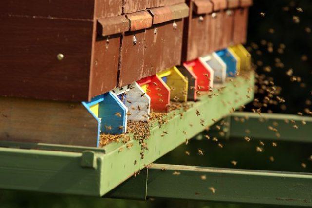 Kočovné rámy na včelí farmě Rokytník