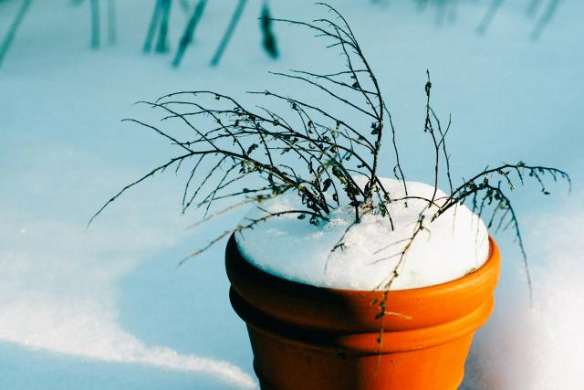 květináč, větvička, sníh, zima, zahrada v zimě (ilustrační obr.)