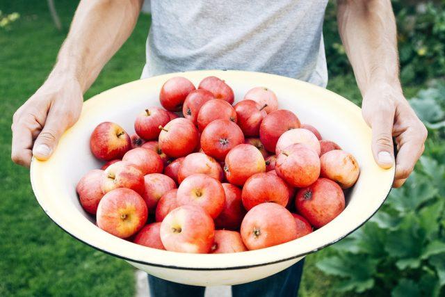 jablka ze zahrádka, zahradničení, úroda