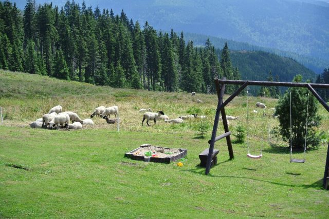Na krkonošských stráních se znovu objevují zvířata | foto: Zbyněk Pánek