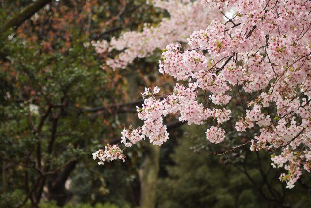 Kvetoucí stromy  (ilustrační foto) | foto: Fotobanka Pixabay