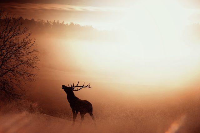 Jelen,  příroda  (ilustrační foto) | foto: Fotobanka Pixabay